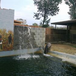Limassol Zoo Hippo Pool